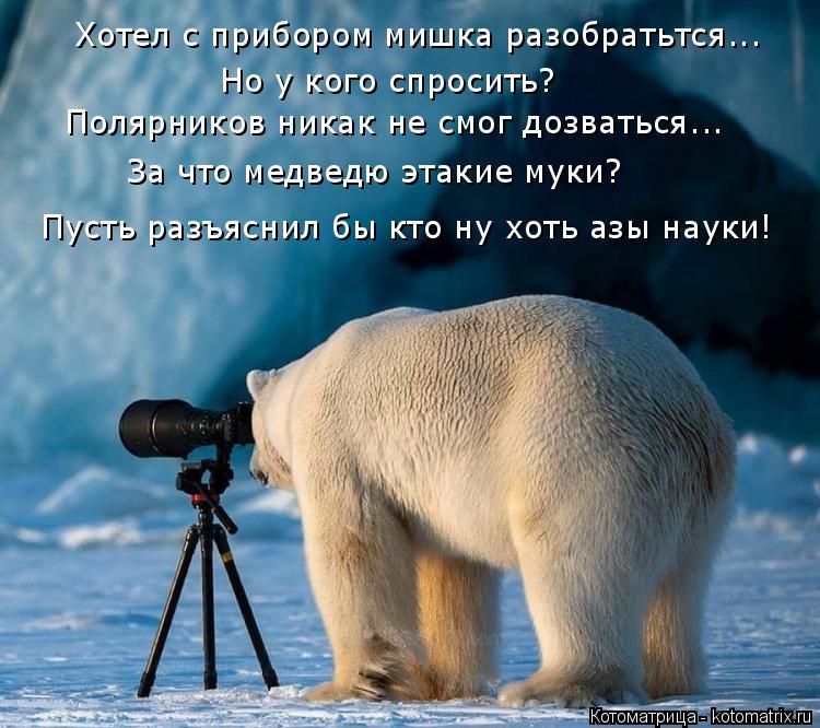Котоматрица: Хотел с прибором мишка разобратьтся... Но у кого спросить?  Полярников никак не смог дозваться... За что медведю этакие муки?  Пусть разъяснил