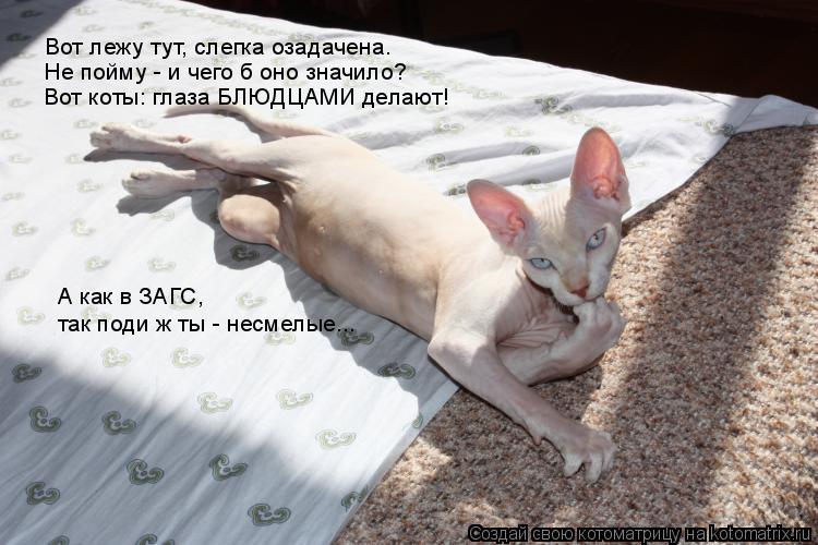 Котоматрица: Вот лежу тут, слегка озадачена. Не пойму - и чего б оно значило? Вот коты: глаза БЛЮДЦАМИ делают! А как в ЗАГС,  так поди ж ты - несмелые...