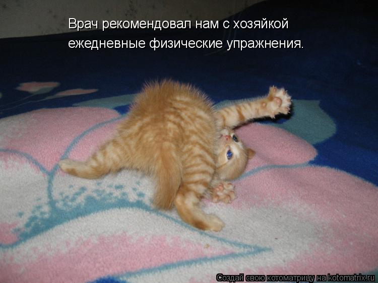 Котоматрица: Врач рекомендовал нам с хозяйкой   ежедневные физические упражнения.