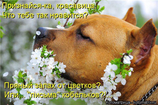 """Котоматрица: Признайся-ка, красавица, Что тебе так нравится? Пряный запах от цветков? Или... """"письма"""" кобельков?!..."""