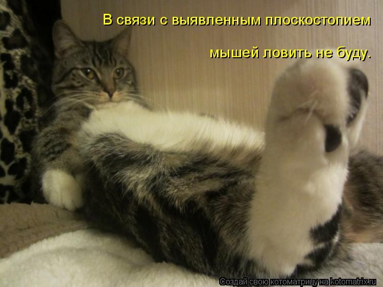 Котоматрица: В связи с выявленным плоскостопием мышей ловить не буду.