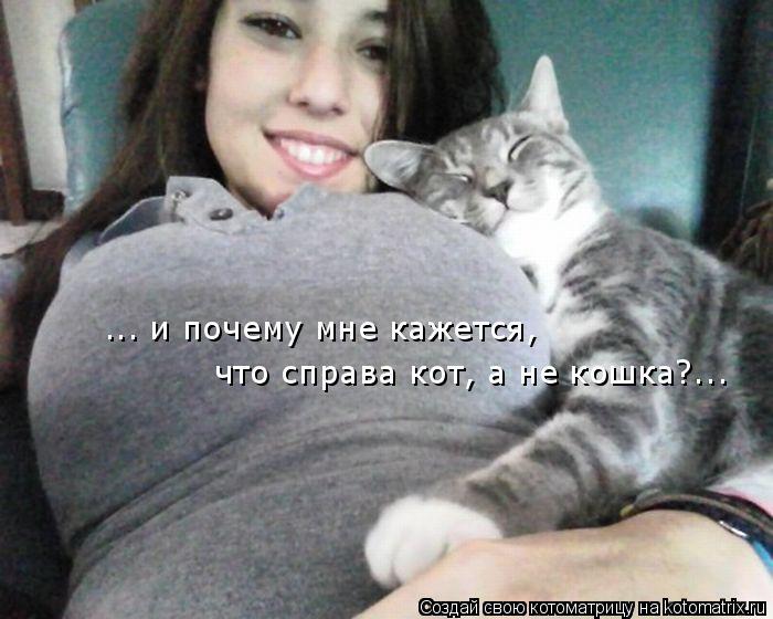 Котоматрица: ... и почему мне кажется,  что справа кот, а не кошка?...