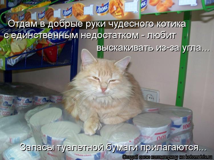 Котоматрица: Отдам в добрые руки чудесного котика с единственным недостатком - любит выскакивать из-за угла...   Запасы туалетной бумаги прилагаются...