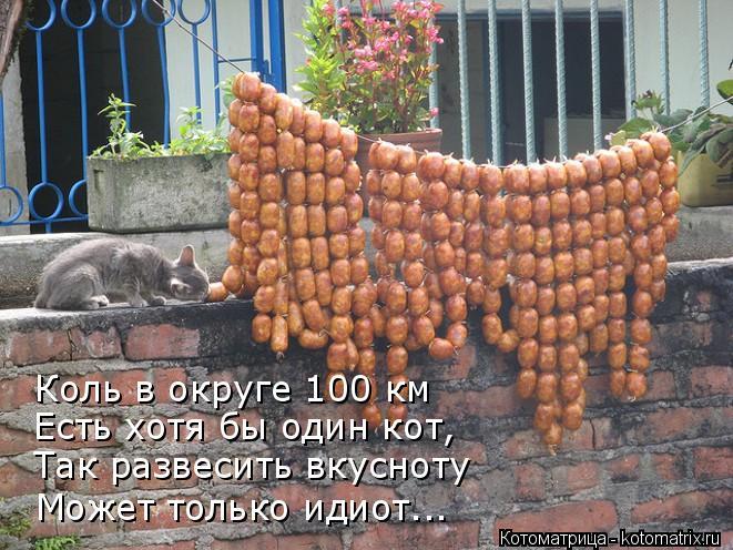 Котоматрица: Коль в округе 100 км Есть хотя бы один кот, Так развесить вкусноту Может только идиот...