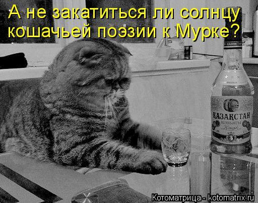 Котоматрица: А не закатиться ли солнцу кошачьей поэзии к Мурке?