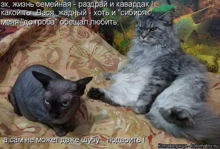 """Котоматрица: какой ты ,Вася, жадный - хоть и """"сибиряк"""", эх, жизнь семейная - раздрай и кавардак ! меня """"до гроба"""" обещал любить, а сам не может даже шубу... пода?"""