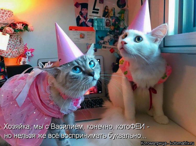 Котоматрица: Хозяйка, мы с Василием, конечно, котоФЕИ - но нельзя же всё воспринимать буквально...