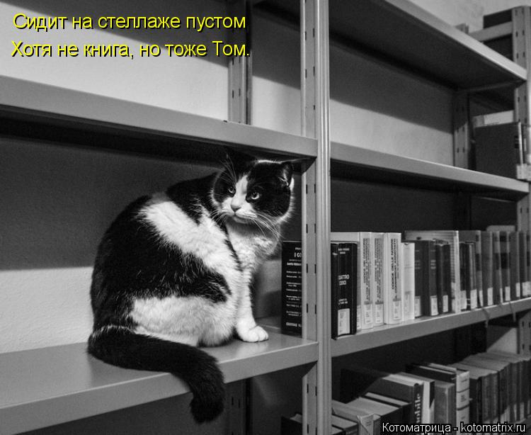 Котоматрица: Сидит на стеллаже пустом Хотя не книга, но тоже Том.