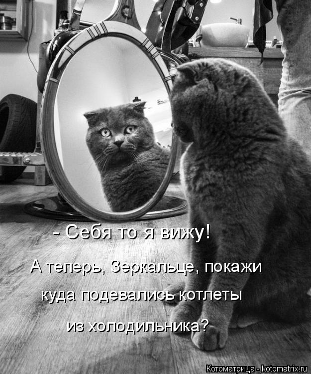 Котоматрица: - Себя то я вижу! А теперь, Зеркальце, покажи  куда подевались котлеты  из холодильника?