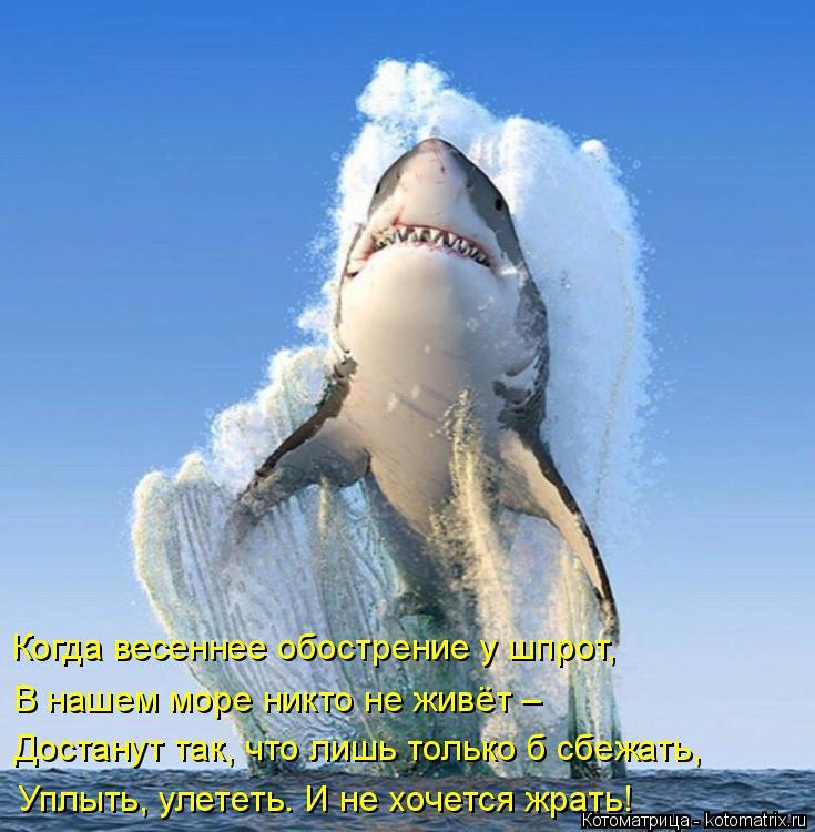 Котоматрица: Когда весеннее обострение у шпрот, В нашем море никто не живёт – Достанут так, что лишь только б сбежать,  Уплыть, улететь. И не хочется жрать