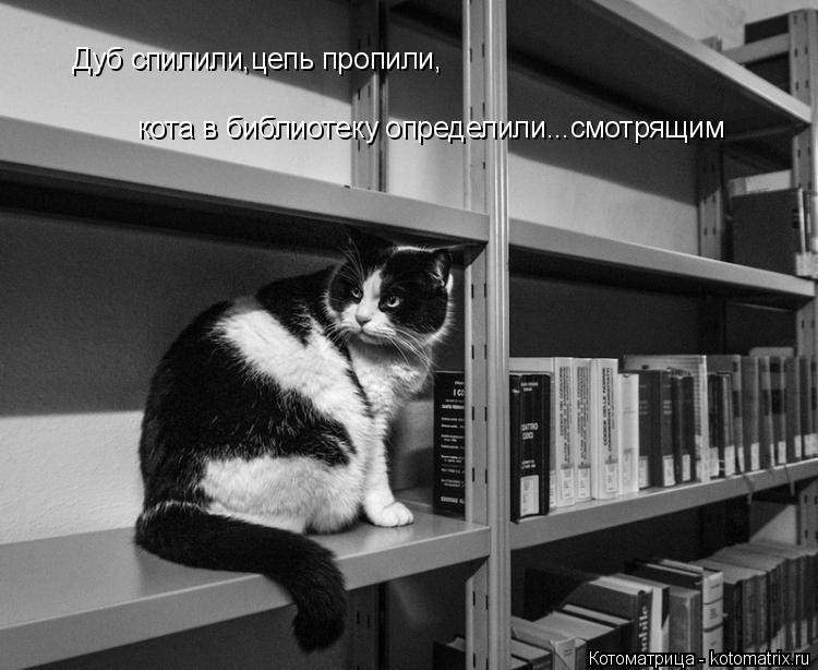 Котоматрица: Дуб спилили,цепь пропили, кота в библиотеку определили...смотрящим