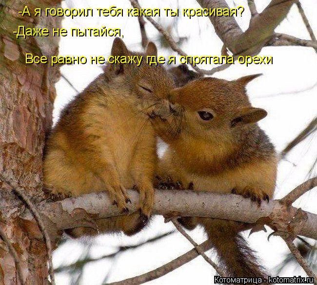 Котоматрица: -А я говорил тебя какая ты красивая? -Даже не пытайся, Все равно не скажу где я спрятала орехи