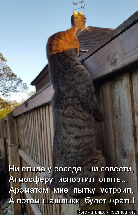 Котоматрица: Ни стыда у соседа,  ни совести, Атмосферу  испортил  опять... Ароматом  мне  пытку  устроил, А потом шашлыки  будет жрать!