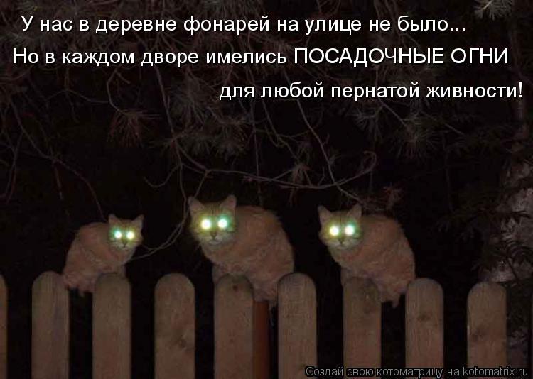 Котоматрица: У нас в деревне фонарей на улице не было... Но в каждом дворе имелись ПОСАДОЧНЫЕ ОГНИ для любой пернатой живности!