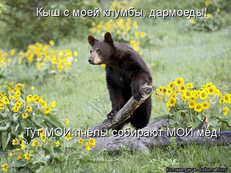 Котоматрица: Кыш с моей клумбы, дармоеды! Тут МОИ пчёлы собирают МОЙ мёд!