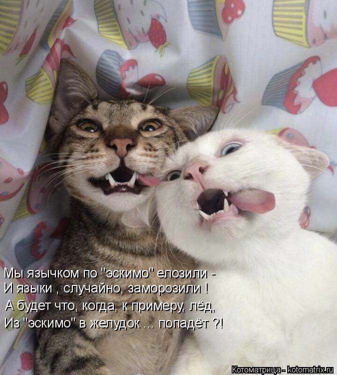 """Котоматрица: Мы язычком по """"эскимо"""" елозили - И языки , случайно, заморозили ! А будет что, когда, к примеру, лёд, Из """"эскимо"""" в желудок ... попадёт ?!"""