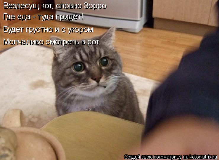 Котоматрица: Вездесущ кот, словно Зорро Где еда - туда придёт! Будет грустно и с укором Молчаливо смотреть в рот.