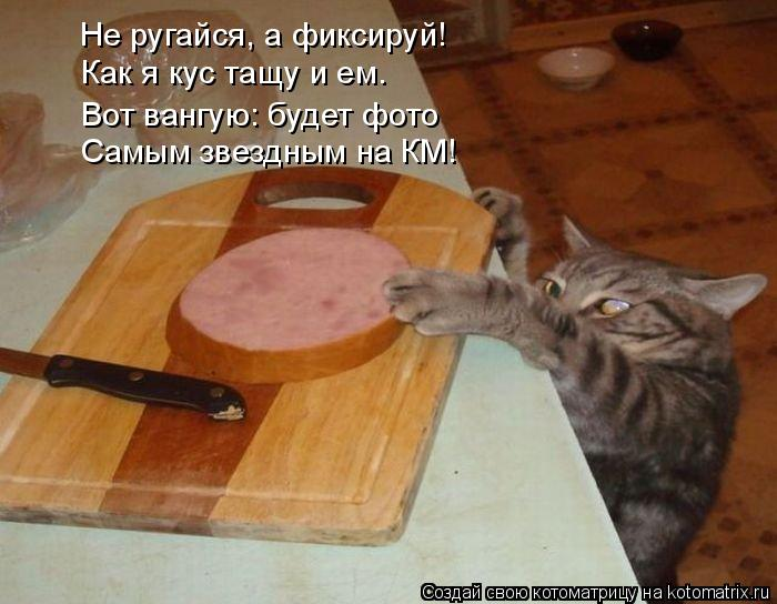 Котоматрица: Не ругайся, а фиксируй! Как я кус тащу и ем. Вот вангую: будет фото Самым звездным на КМ!