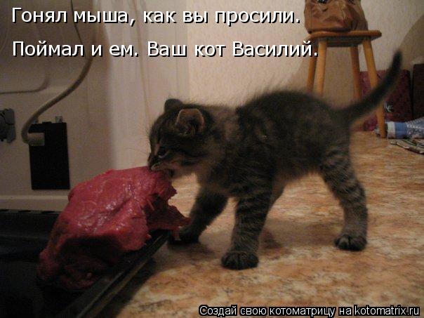 Котоматрица: Гонял мыша, как вы просили. Поймал и ем. Ваш кот Василий.