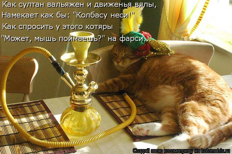 """Котоматрица: Как султан вальяжен и движенья вялы, Намекает как бы: """"Колбасу неси!"""" """"Может, мышь поймаешь?"""" на фарси... Как спросить у этого котяры"""