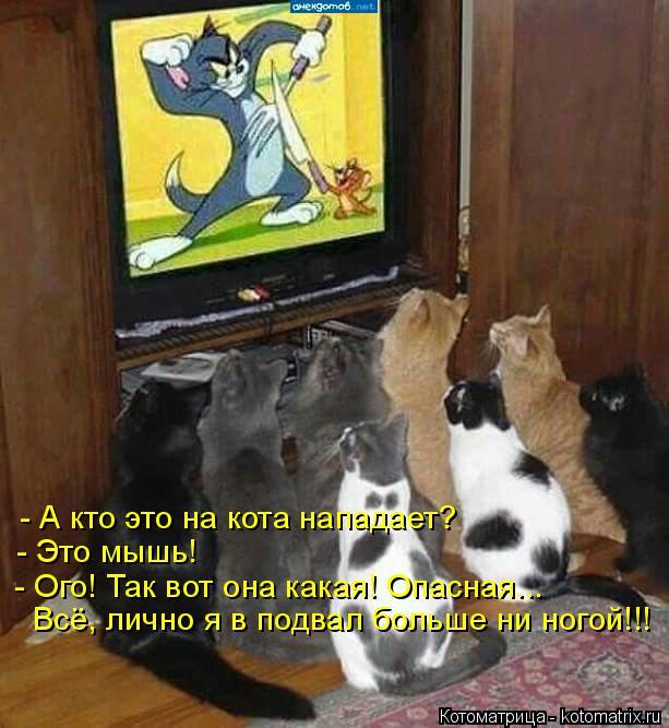 Котоматрица: - А кто это на кота нападает? - Это мышь! - Ого! Так вот она какая! Опасная... Всё, лично я в подвал больше ни ногой!!!