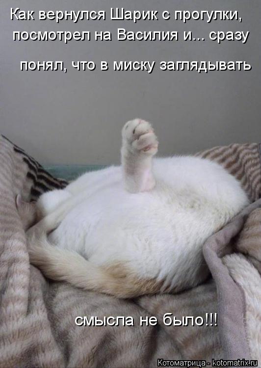 Котоматрица: Как вернулся Шарик с прогулки, посмотрел на Василия и... сразу понял, что в миску заглядывать смысла не было!!!