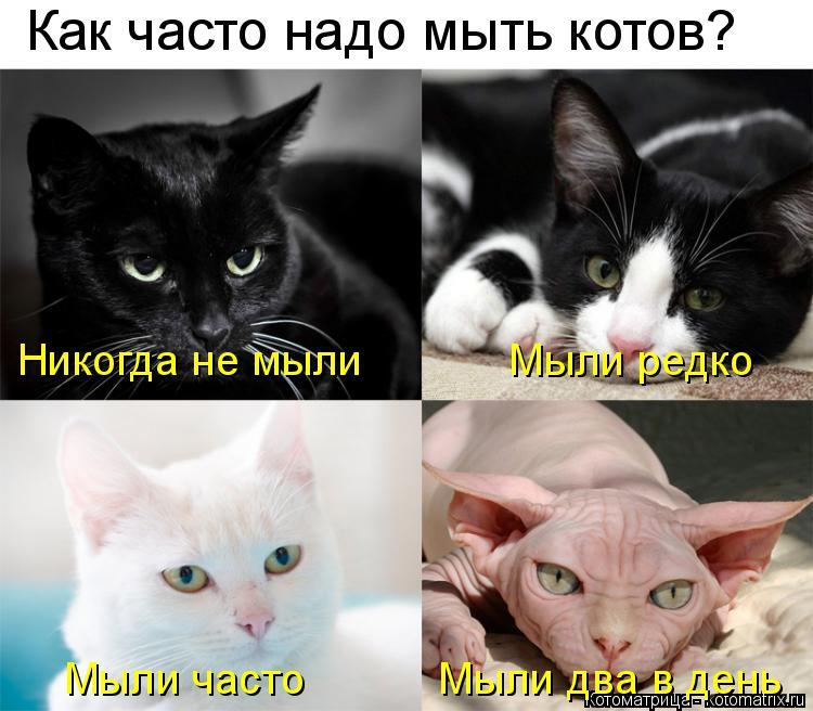 Котоматрица: Как часто надо мыть котов? Никогда не мыли            Мыли редко Мыли часто           Мыли два в день
