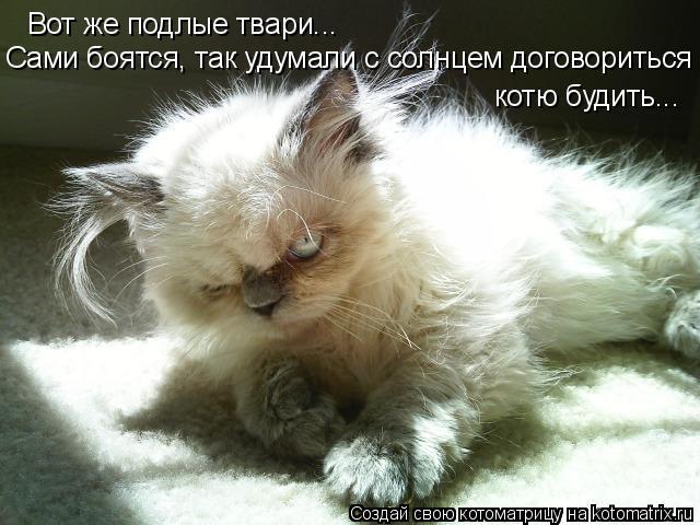 Котоматрица: Вот же подлые твари... Сами боятся, так удумали с солнцем договориться котю будить...