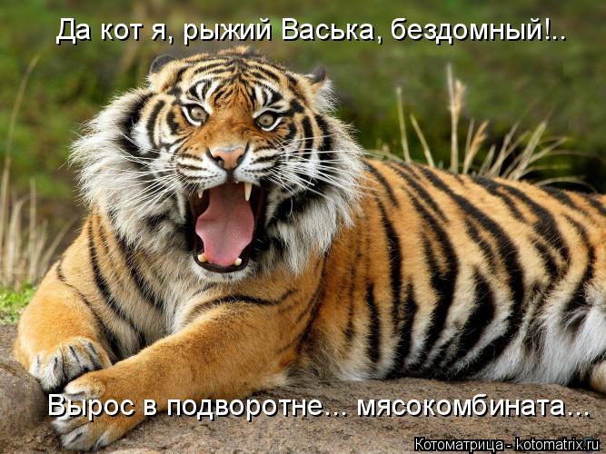 Котоматрица: Вырос в подворотне... мясокомбината... Да кот я, рыжий Васька, бездомный!..