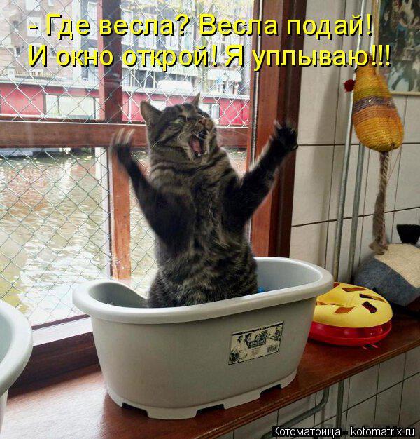 Котоматрица: - Где весла? Весла подай! И окно открой! Я уплываю!!!