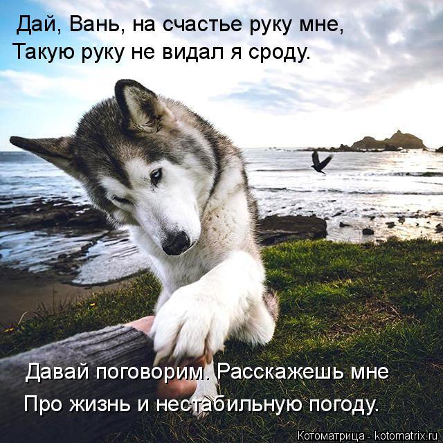 Котоматрица: Дай, Вань, на счастье руку мне, Такую руку не видал я сроду. Давай поговорим. Расскажешь мне Про жизнь и нестабильную погоду.