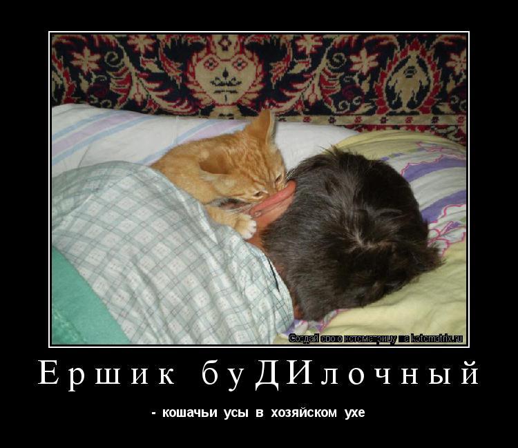 Котоматрица: Ершик буДИлочный -  кошачьи  усы  в  хозяйском  ухе
