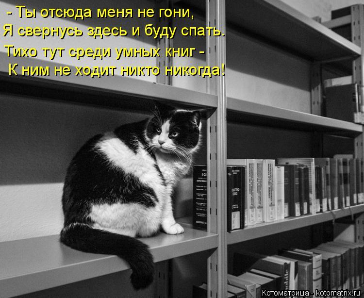 Котоматрица: - Ты отсюда меня не гони, Я свернусь здесь и буду спать. Тихо тут среди умных книг -  К ним не ходит никто никогда!