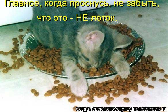 Котоматрица: Главное, когда проснусь, не забыть, что это - НЕ лоток.