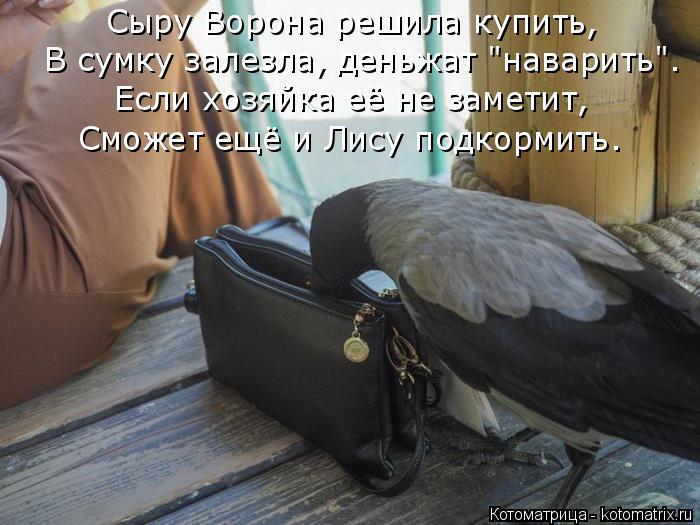 """Котоматрица: Сыру Ворона решила купить, В сумку залезла, деньжат """"наварить"""". Если хозяйка её не заметит, Сможет ещё и Лису подкормить."""