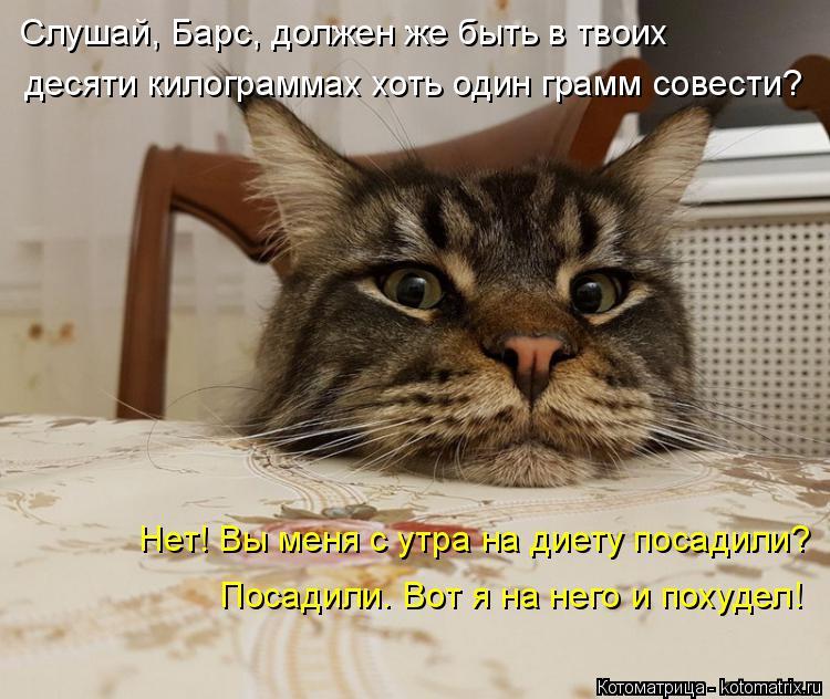 Котоматрица: Слушай, Барс, должен же быть в твоих  десяти килограммах хоть один грамм совести? Нет! Вы меня с утра на диету посадили? Посадили. Вот я на нег?
