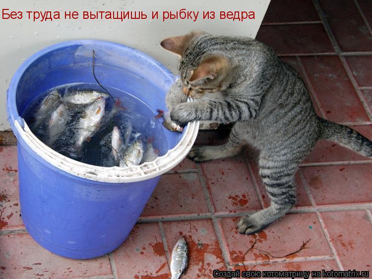 Котоматрица: Без труда не вытащишь и рыбку из ведра