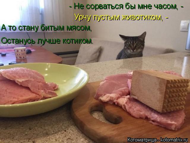 Котоматрица: - Не сорваться бы мне часом, - Урчу пустым животиком, - А то стану битым мясом, Останусь лучше котиком.