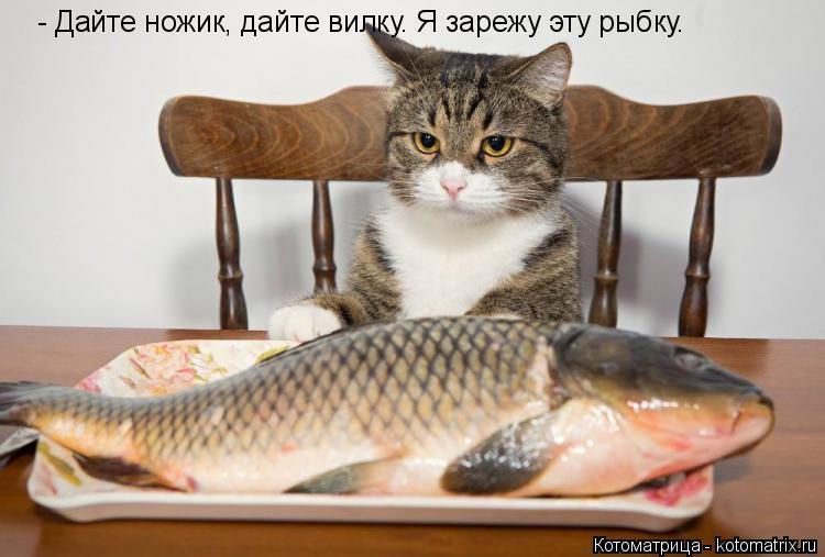 Котоматрица: - Дайте ножик, дайте вилку. Я зарежу эту рыбку.