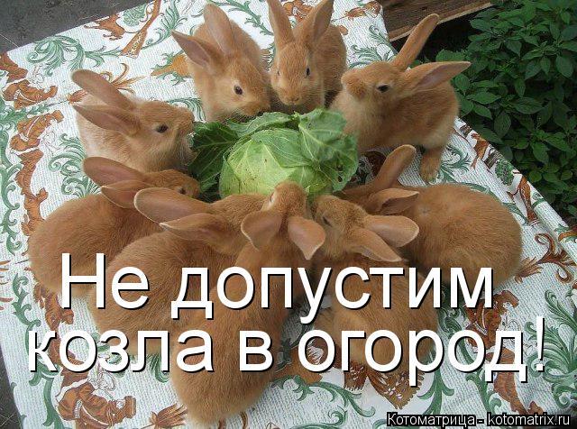 Котоматрица: Не допустим  козла в огород!