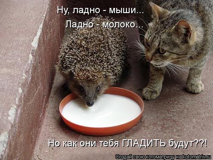 Котоматрица: Ну, ладно - мыши... Ладно - молоко... Но как они тебя ГЛАДИТЬ будут??!