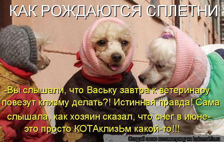 Котоматрица: КАК РОЖДАЮТСЯ СПЛЕТНИ -Вы слышали, что Ваську завтра к ветеринару повезут клизму делать?! Истинная правда! Сама слышала, как хозяин сказал, ч