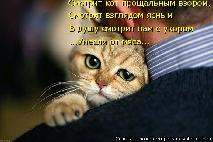 Котоматрица: Смотрит кот прощальным взором, Смотрит взглядом ясным В душу смотрит нам с укором ...Унесли от мяса...