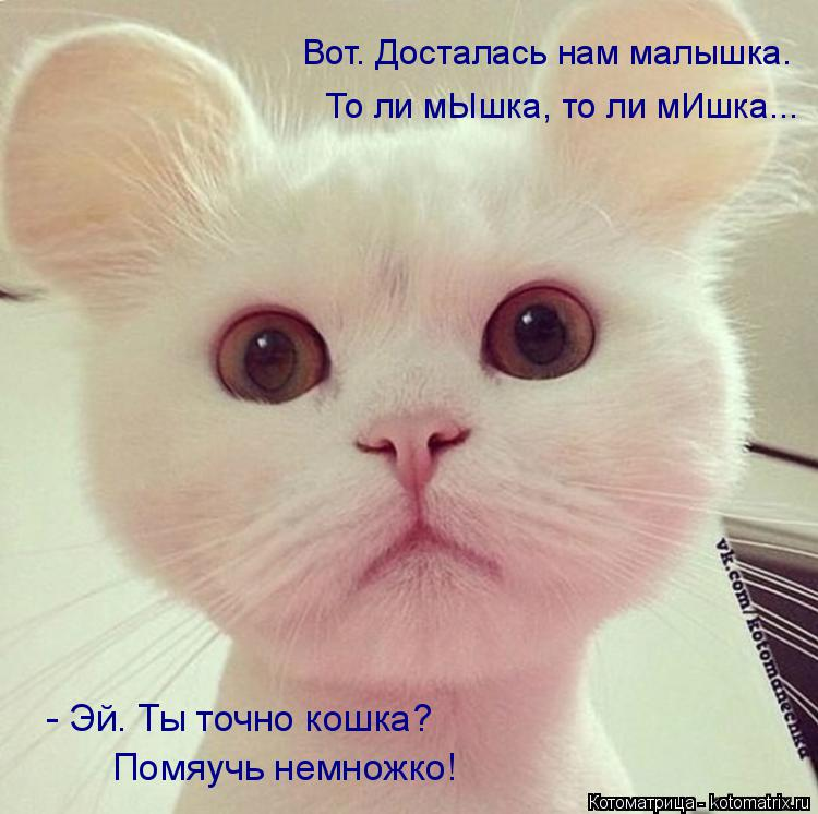 Котоматрица: - Эй. Ты точно кошка? Помяучь немножко! Вот. Досталась нам малышка. То ли мЫшка, то ли мИшка...