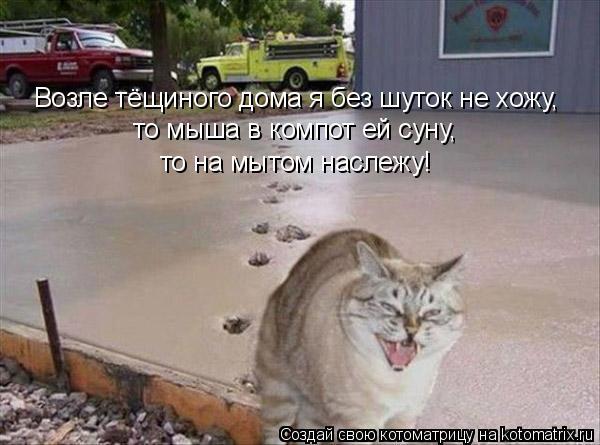 Котоматрица: Возле тёщиного дома я без шуток не хожу,  то мыша в компот ей суну,  то на мытом наслежу!