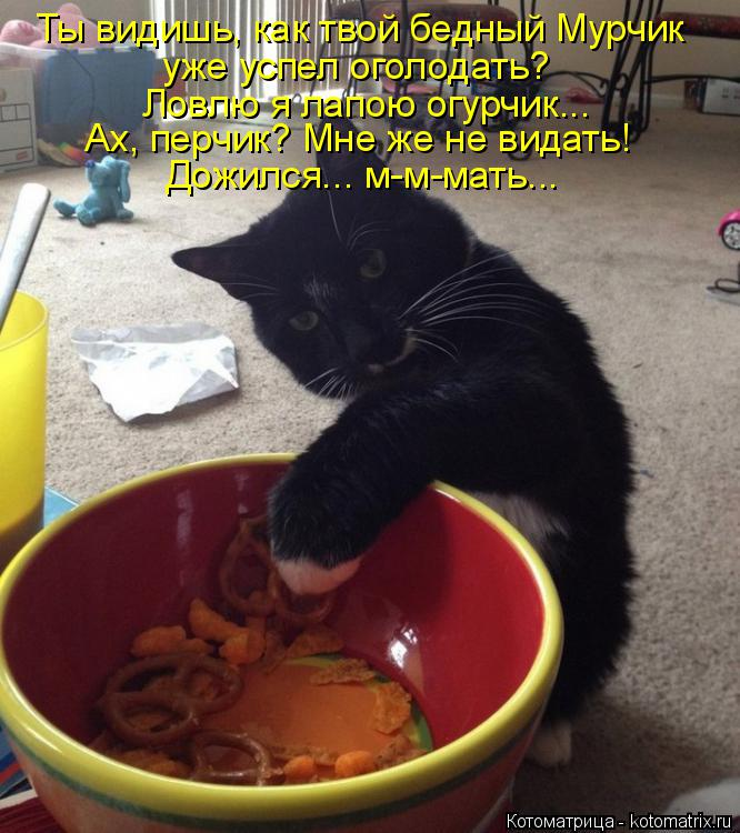 Котоматрица: Ты видишь, как твой бедный Мурчик уже успел оголодать? Ловлю я лапою огурчик... Ах, перчик? Мне же не видать! Дожился... м-м-мать...