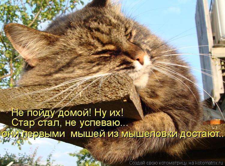 Котоматрица: Не пойду домой! Ну их! Стар стал, не успеваю... они первыми  мышей из мышеловки достают...