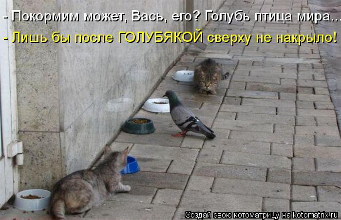 Котоматрица: - Покормим может, Вась, его? Голубь птица мира... - Лишь бы после ГОЛУБЯКОЙ сверху не накрыло!