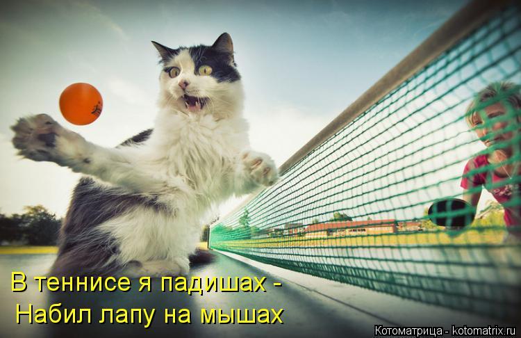 Котоматрица: В теннисе я падишах - Набил лапу на мышах