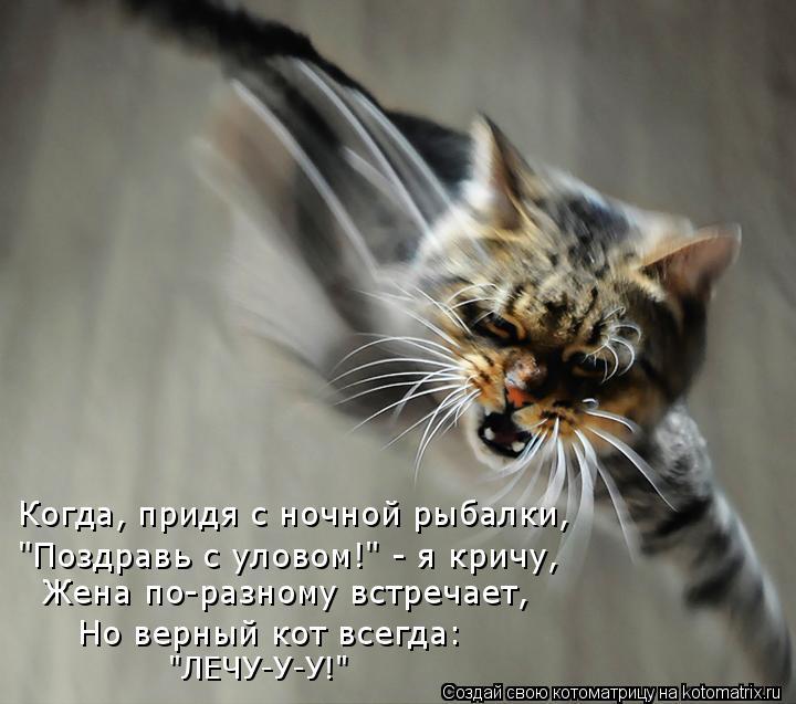 """Котоматрица: Когда, придя с ночной рыбалки, """"Поздравь с уловом!"""" - я кричу, Жена по-разному встречает, Но верный кот всегда: """"ЛЕЧУ-У-У!"""""""